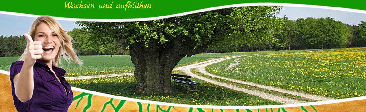 zwei Wege durch Wiesen führen zusammen, mit Bank am Baum: © wira91 - Fotolia