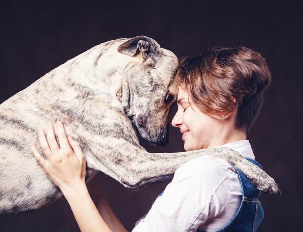 Tierkommunkation- Ausbildung Tierenergetik- Ausbildung